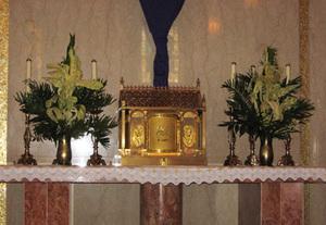Tabernaclepalms